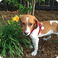 Adopt A Pet :: Ella - Huntsville, AL