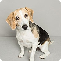 Adopt A Pet :: Daisy (Westhampton) - New York, NY