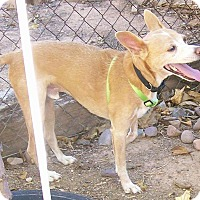 Adopt A Pet :: Billy - Phoenix, AZ