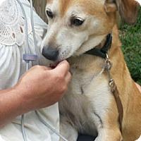 Adopt A Pet :: Spanky - Canterbury, CT
