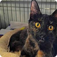 Adopt A Pet :: SAVANNAH - Ocala, FL