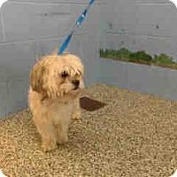 Adopt A Pet :: URGENT on 10/27 SAN BERNARDINO - San Bernardino, CA