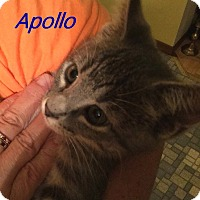 Adopt A Pet :: Apollo - Chisholm, MN
