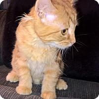 Adopt A Pet :: Billie - Highland, IN