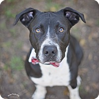 Adopt A Pet :: Miller - Kingwood, TX