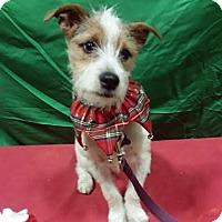 Adopt A Pet :: PJ - Pending! - Detroit, MI