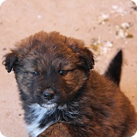 Adopt A Pet :: Chewy - Phoenix, AZ
