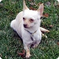 Adopt A Pet :: Chase - Beavercreek, OH
