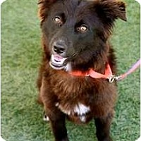 Adopt A Pet :: Wyatt - Mission Viejo, CA