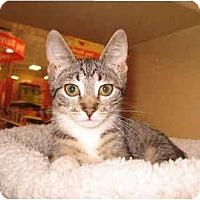 Adopt A Pet :: DeraLee - Colmar, PA