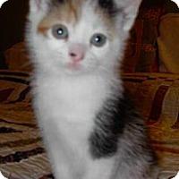 Adopt A Pet :: Autumn - Reston, VA