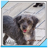 Adopt A Pet :: Willow - San Antonio, TX