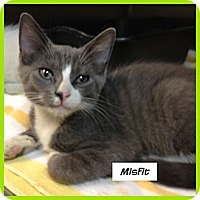 Adopt A Pet :: Misfit - Miami, FL