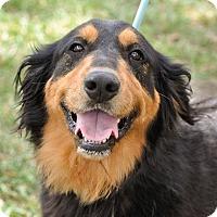 Adopt A Pet :: Reagan - Gainesville, FL