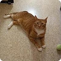 Adopt A Pet :: Elliot - McHenry, IL