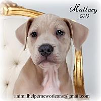 Adopt A Pet :: Mallory - Metairie, LA