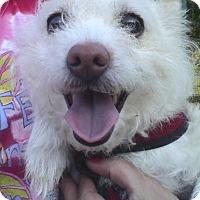 Adopt A Pet :: Maggie - Cumberland, MD