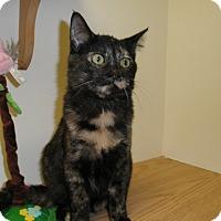 Adopt A Pet :: Yentyl - Milwaukee, WI