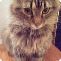 Adopt A Pet :: Ruby - Springdale, AR