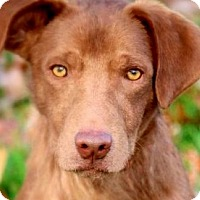 Adopt A Pet :: WOODY(OUR