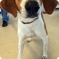 Adopt A Pet :: Bristol - Lake City, FL