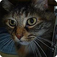 Adopt A Pet :: Felicia - Hamburg, NY