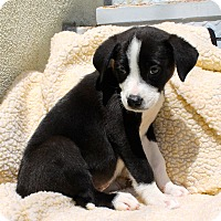 Adopt A Pet :: Pacific Rose - Los Angeles, CA