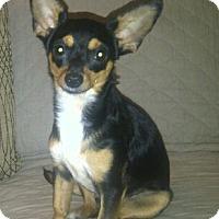 Adopt A Pet :: Kayla - Aurora, CO