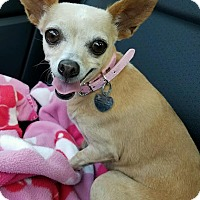 Adopt A Pet :: Stacey - San Diego, CA