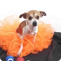 Adopt A Pet :: A571118 - Oroville, CA