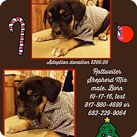 Adopt A Pet :: Titus - springtown, TX
