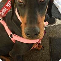 Adopt A Pet :: Calypso - Mission Viejo, CA