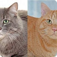 Adopt A Pet :: Cosmo & Tigger (Bonded Pair) - Encinitas, CA