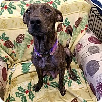 Adopt A Pet :: Theresa - Tomah, WI