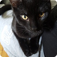 Adopt A Pet :: Jade - New York, NY