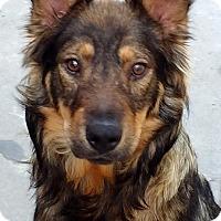 Adopt A Pet :: Honey - Buena Park, CA