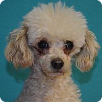 Adopt A Pet :: Charley - Visalia, CA