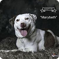Adopt A Pet :: Marybeth - Acton, CA