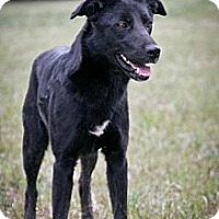 Labrador Retriever Mix Dog for adoption in Jackson, Mississippi - Anna Karina