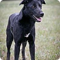 Adopt A Pet :: Anna Karina - Jackson, MS