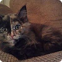 Adopt A Pet :: Rosalie - Fairbury, NE