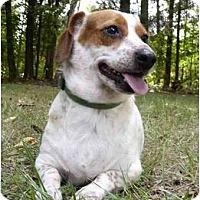Adopt A Pet :: Tubbie - Mocksville, NC