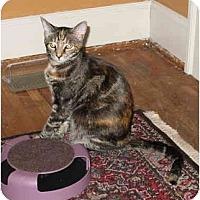 Adopt A Pet :: Randy & Renee - Cincinnati, OH