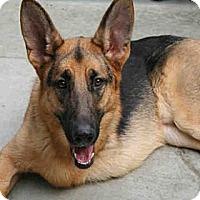 Adopt A Pet :: Bentley - URGENT - Seattle, WA