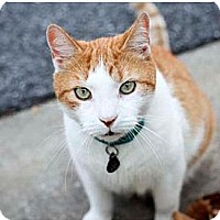 Adopt A Pet :: Stray Cat - Columbia, MD