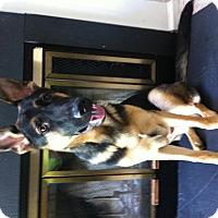 Adopt A Pet :: Sergeant - Nanuet, NY