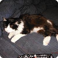 Adopt A Pet :: Rufus - Toledo, OH