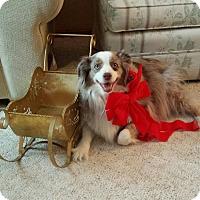 Adopt A Pet :: Sienna - Minneapolis, MN
