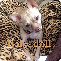 Adopt A Pet :: Baby doll - calimesa, CA