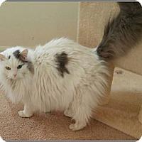 Adopt A Pet :: Felicia - Hampton, VA